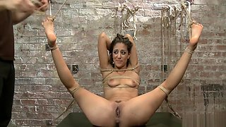 Hogtied and suspended spinner toyed